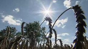 Gute Nachricht: Neue Weizensorte trotzt Salzböden
