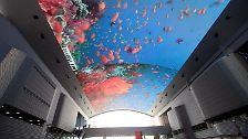 Expo 2012 in Südkorea: Der Ozean lebt - bis er stirbt