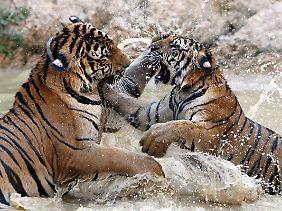 tiger spiele kostenlos spielen