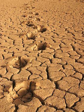 Der CO2-Fußabdruck der Malier ist winzig - hier Spuren eines Elefanten im trockenen Banzena-See im Süden Malis.