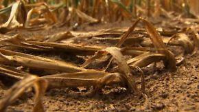 Rohstoffpreise explodieren: US-Farmer kämpfen gegen Rekord-Dürre