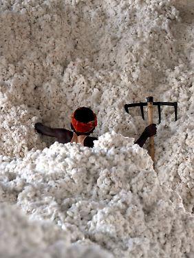 Indien liefert rund die Hälfte der gesamten Biobaumwolle.