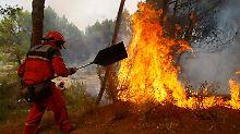 Ein Feuerwehrmann kämpft  bei Alicante gegen die Flammen. Dutzende Brände wüten derzeit in Spaniens Wäldern.
