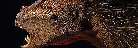 So stellen sich Forscher den Pegomastax africanus vor.