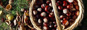 Kastanien sammeln oder das bunte Herbstlaub im Wald bewundern: Solche Dinge können glücklich machen.