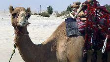 """Die Opec und das """"schwarze Gold"""": Kamele, Scheichs und jede Menge Öl"""