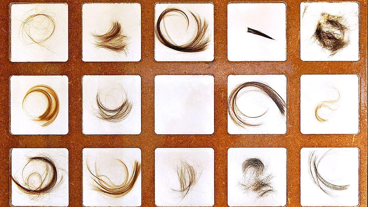 Haarfollikel Züchten