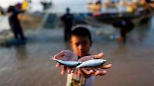 Meere in 40 Jahren leer?: Welchen Fisch man noch essen darf