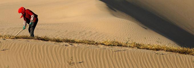 Mit Heu versucht ein Arbeiter, eine Barriere zu schaffen und damit die Ausbreitung der Tengger-Wüste in der chinesischen Provinz Gansu zu stoppen.