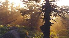 Naturwunder-Wahl: Die schönsten Wälder Deutschlands