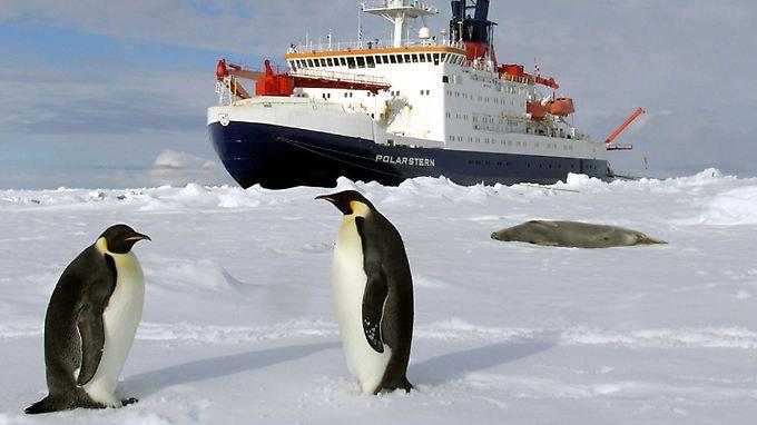 """Der Forschungseisbrecher """"Polarstern"""" des Alfred-Wegener-Instituts liegt im ewigen Eis der sommerlichen Antarktis."""