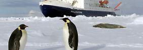 """""""Das ist sehr beunruhigend"""": Schnee lässt Antarktis-Eis brechen"""