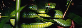 """""""Science Fiction"""" am Mekong: 126 neue Arten entdeckt"""