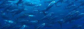 Gift gelangt in Nahrungskette: Viel mehr Quecksilber in den Meeren