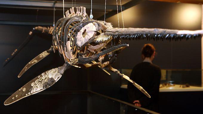 Vor 244 Millionen Jahren beherrschten Fischsaurier die Meere.