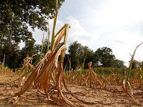 Auch der US-Bundesstaat Indiana litt im vergangenen Jahr unter einer Dürre.