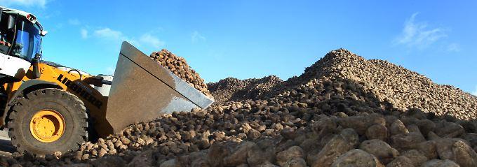 Zuckerrüben aus Deutschland lassen der Konkurrenz aus Übersee keine Chance.