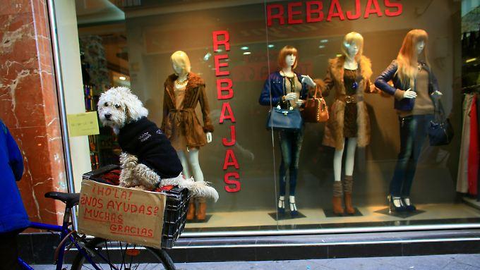 """Eine Szene in der andalusischen Hauptstadt Sevilla. Ein Pudel sitzt in einer Fahrradkiste mit der Aufschrift: """"Hallo, kannst du uns helfen?"""""""