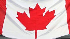 Kanadischer Ahorn: drei Flügel, glatte Blattspitzen