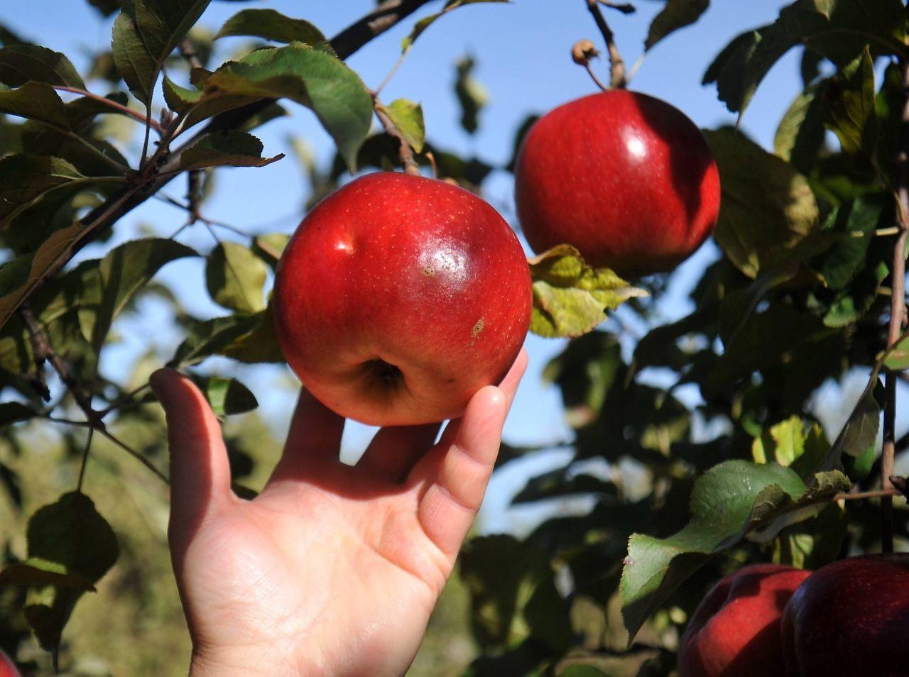 Bildergebnis für eva griff zum verbotenen Apfel