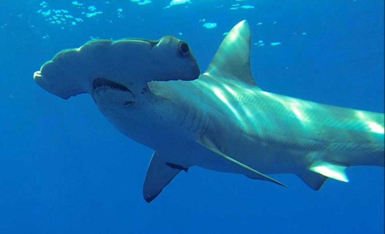 Berühmt Hai Druckbare Malvorlagen Fotos - Druckbare Malvorlagen ...
