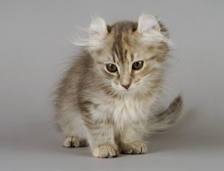 Keine Sorge, es soll hier nicht um niedliche Katzenfotos gehen, sondern vielmehr um die große Bedeutung von Katzen für den Menschen. Denn ...