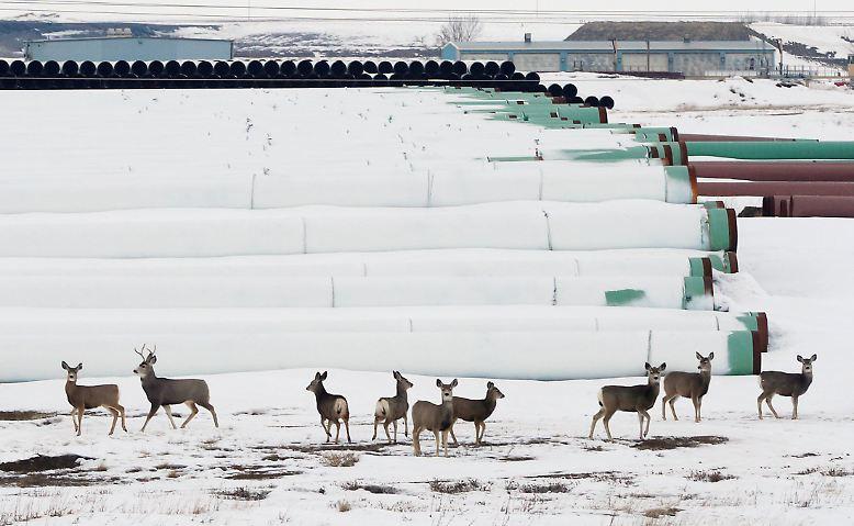 ... ordnete Trump den Weiterbau zweier umstrittener Pipeline-Projekte an. Keystone XL heißt eines davon. Die Pipeline soll Öl aus Kanada zu Raffinerien in Texas befördern. Trumps Vorgänger Obama hatte das Projekt wegen Klimaschutz-Bedenken auf Eis gelegt. Dass die Pipeline nun doch ...