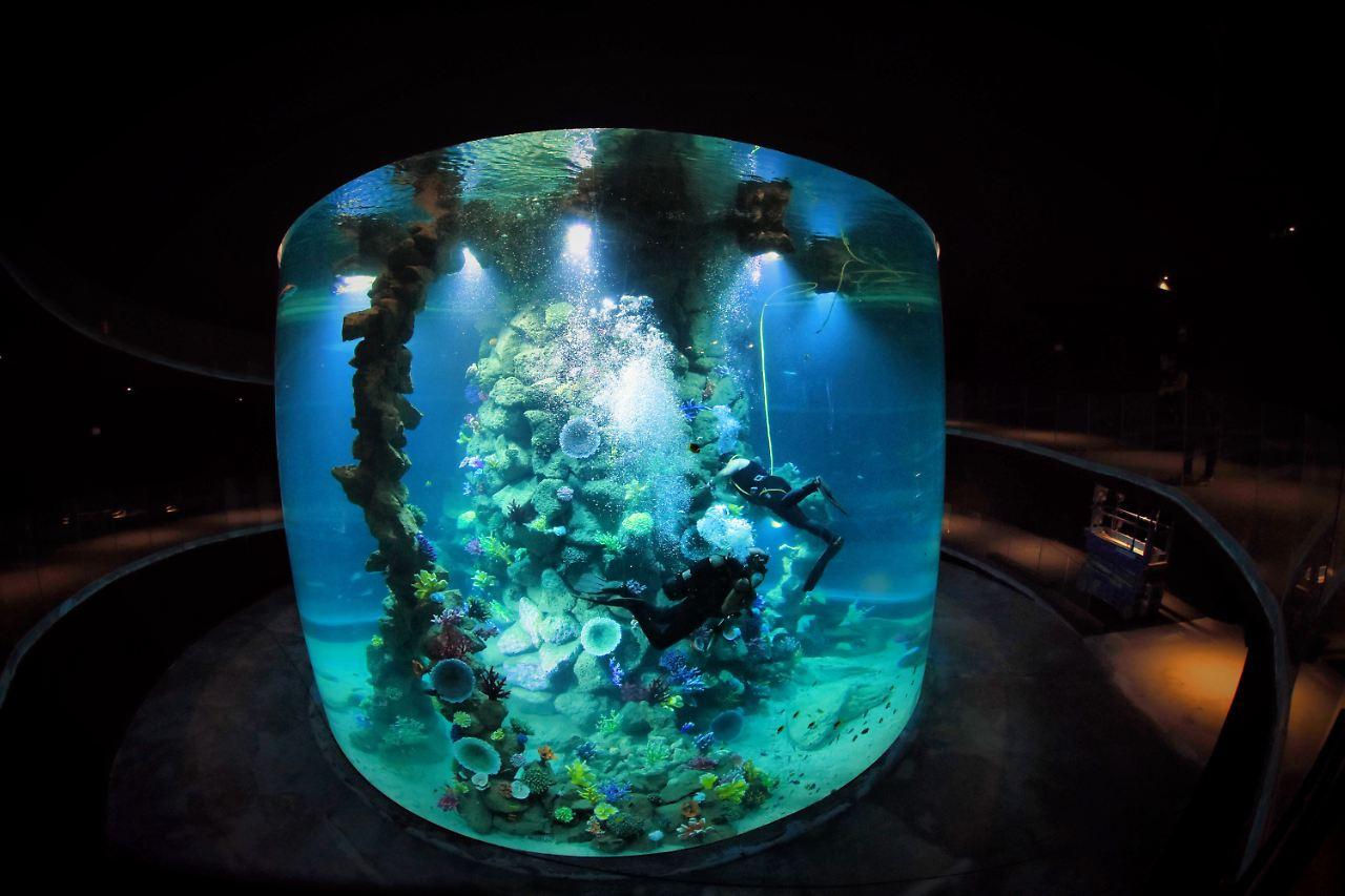 Aquarium auf gran canaria das poema del mar lockt kanaren for Aquarium poema del mar