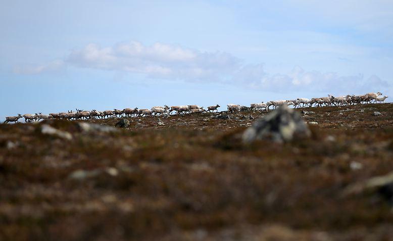 In der Arktis ist die Durchschnittstemperatur gegenüber der vorindustriellen Zeit bereits um mehr als 2 Grad Celsius gestiegen.