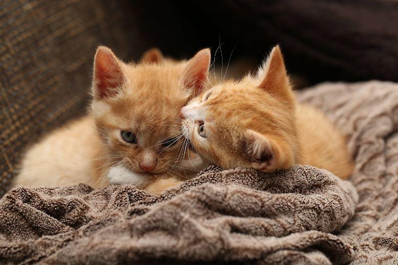 """Katzen, vor allem ganz kleine, sorgen meist für Entzücken und den Ausruf: """"Wie süß!"""" Aber woher ..."""