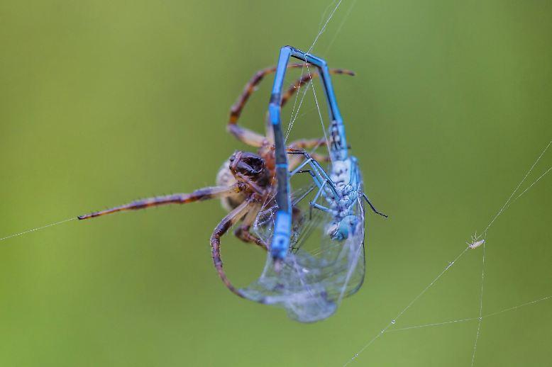 Spinnen sind eigenartige Tiere, ...