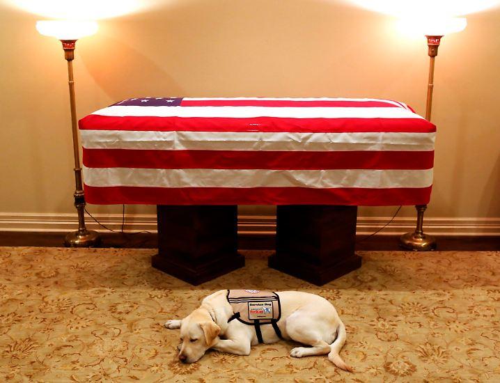 George H. W. Bush ist tot. Und sein Assistenzhund Sully weicht ihm auch am Sarg nicht von der Seite.