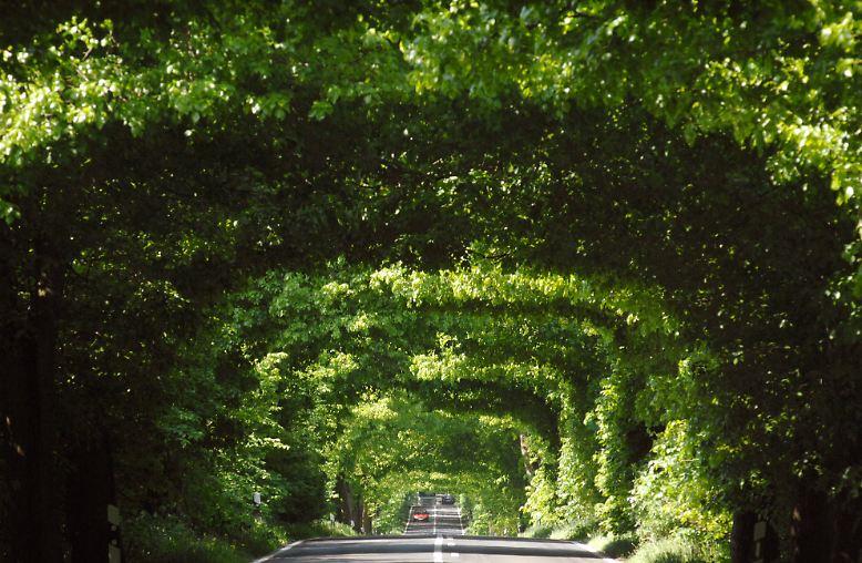 Folgen Sie uns auf eine Reise durch Ostdeutschland. Hier: Eine Allee der alten Bäderstraße zwischen Garz und Putbus auf der Insel Rügen.