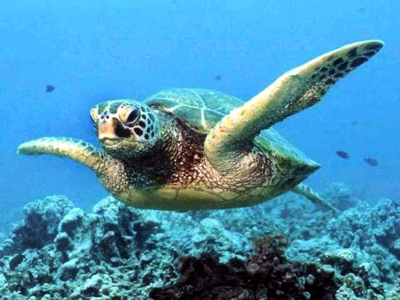 Groß Süsse Meeresschildkröte Färbung Seite Fotos ...