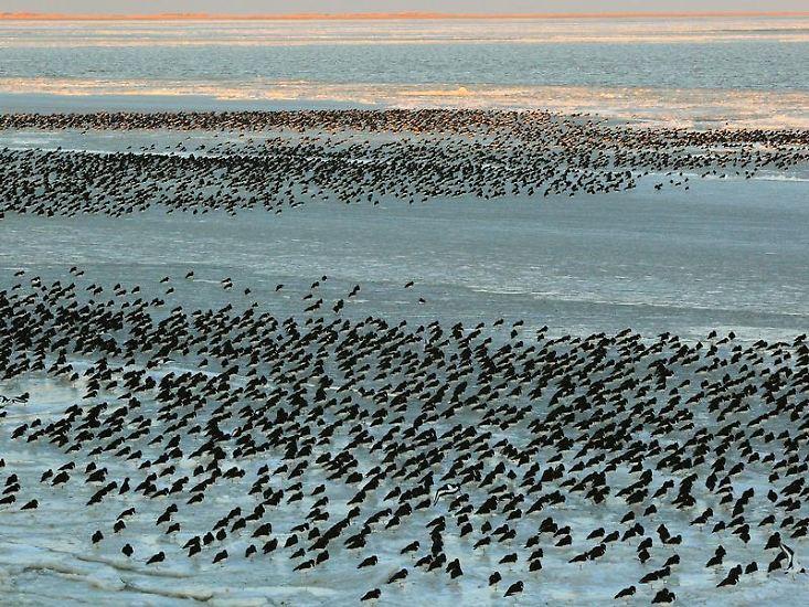 Erst waren es Naturphänomene aus Urlaubsregionen (dabei gewann das Wattenmeer), ...