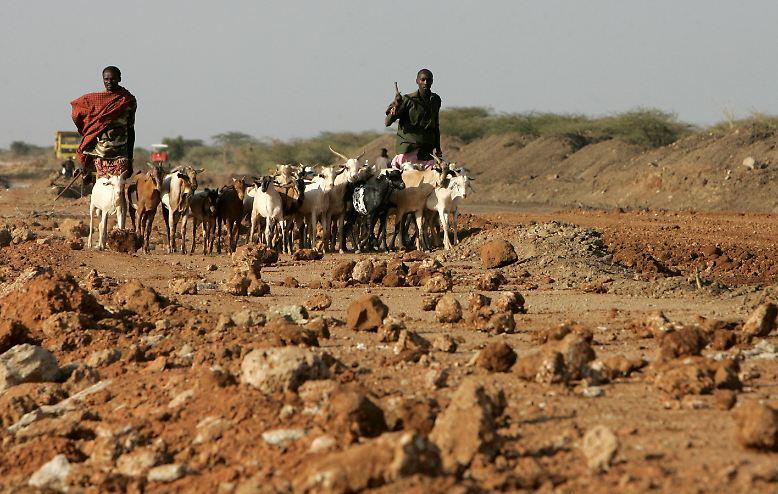 Es war einmal in Kaffa, einer Provinz im Südwesten von Äthiopien. Hirten waren dort mit ihren Ziegen unterwegs, und einige der Tiere knabberten genüsslich an einem Strauch mit weißen Blüten ...