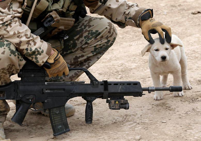 Wenn Soldaten einander bekriegen, versuchen Zivilisten, sich fernzuhalten. Für viele tierische Bewohner von Krisengebieten ist das keine Option.